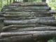 3 træfældning tilbud i Fredericia